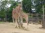 Week-end au zoo d'Amnéville